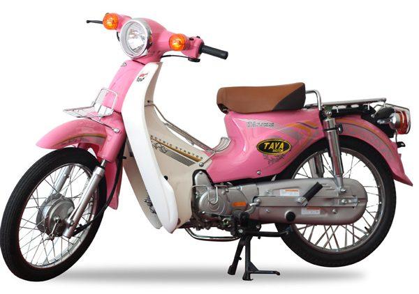 CUB-81-TAYA-HONG